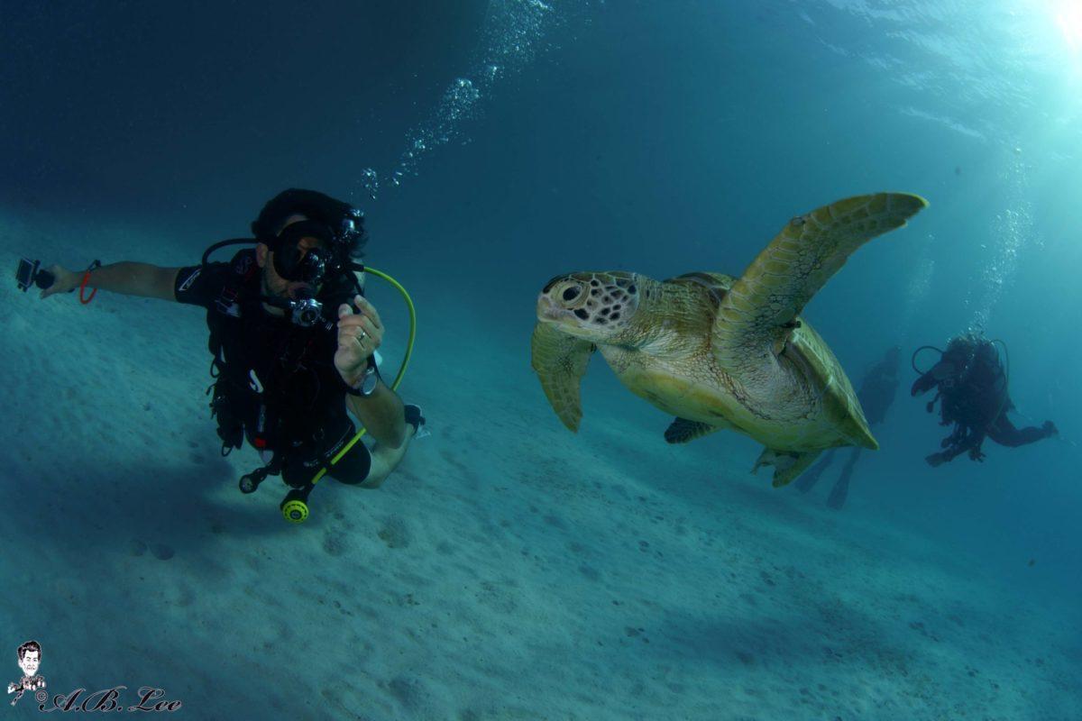 Tauchgang Dominik Johnson mit Schildkröte. Foto von A.B. Lee