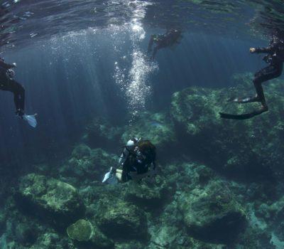 Tauchgang Dominik, Vanessa, May, Cheng beim Saftey Stop Scuba Diving. Foto von A.B. Lee