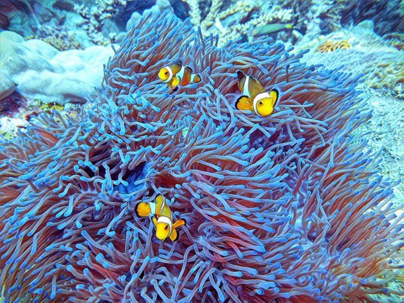 Scuba Diving Divemaster Diarys Nemo